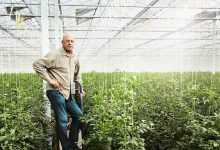 Houweling's Tomatoes gets the most out of energy and water